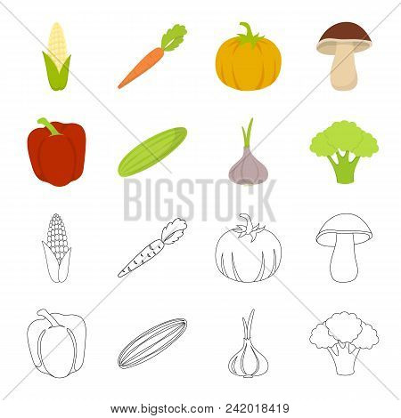 Red Sweet Pepper, Green Cucumber, Garlic, Cabbage. Vegetables Set Collection Icons In Cartoon, Outli