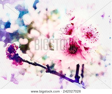 A Cherry Blossom (commonly Known In Japan As Sakura) Cherry Blossoms At The Tokyo Imperial Palace. T