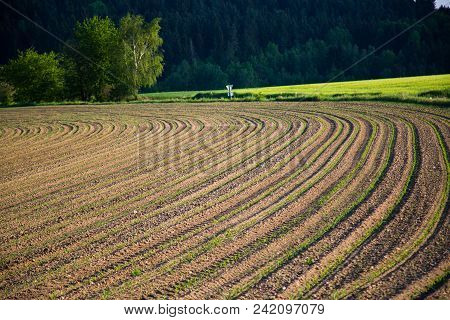 Freshly Picked Acres, Landscape, Cultvated, Crop, Nature