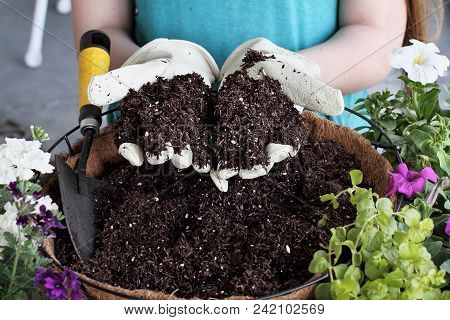 Young Woman Holding Potting Soil Over A Hanging Basket With Flowers. Flowers Include Verbena, Petuni