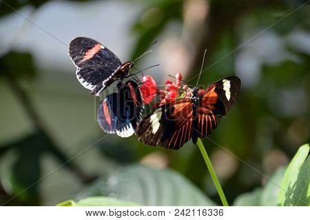 Three Colorful Butterflies Eating On A Flower