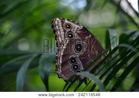 A Brown Butterfly Landed On A Plant