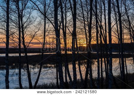 Silhouette Of Trees On The River Bank Against The Background Of The Evening Sky