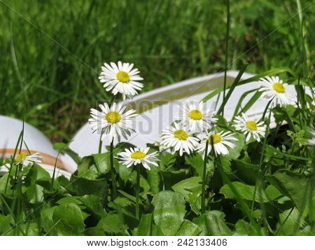 Open Book On Green Grass With Chamomile Flowers. School Holiday, Summer Leisure Or Knowledge Concept