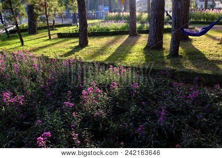 Beautiful Landscape Of Flower City