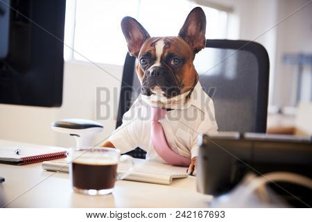 French Bulldog Dressed As Businessman Works At Desk On Computer