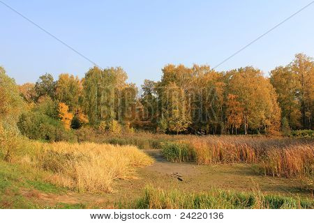 Swamp,forest In  The Aspens