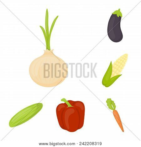 Different Kinds Of Vegetables Cartoon Icons In Set Collection For Design. Vegetables And Vitamins Ve