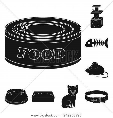 An Animal Cat Black Icons In Set Collection For Design. Caring For A Cat Vector Symbol Stock  Illust