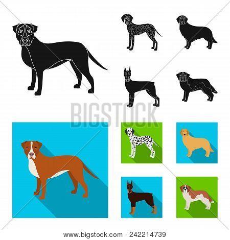 Dog Breeds Black, Flat Icons In Set Collection For Design.dog Pet Vector Symbol Stock  Illustration.