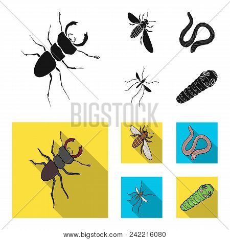 Arthropods Insect Mosquito, Bee.earth Worm, Caterpillar, Vermicular Set Collection Icons In Black, F