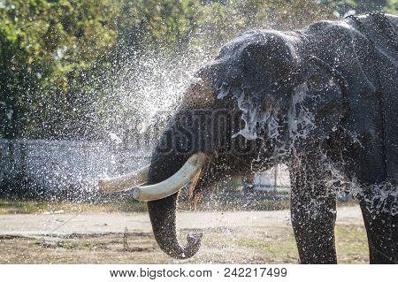 Thailand Isan Surin Elephant Festival Round Up