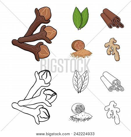 Clove, Bay Leaf, Nutmeg, Cinnamon.herbs And Spices Set Collection Icons In Cartoon, Outline Style Ve