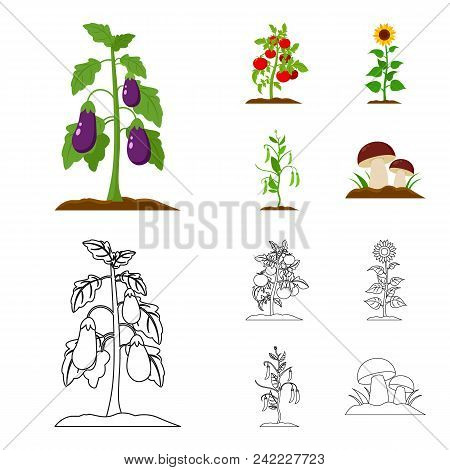 Eggplant, Tomato, Sunflower And Peas.plant Set Collection Icons In Cartoon, Outline Style Vector Sym