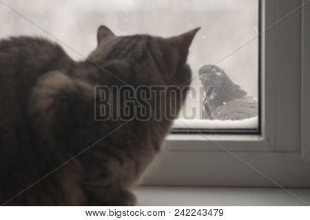The Adult Cat Is Trying To Hunt Pigeons. The Cat Can Not Reach The Birds From Behind The Glass. The