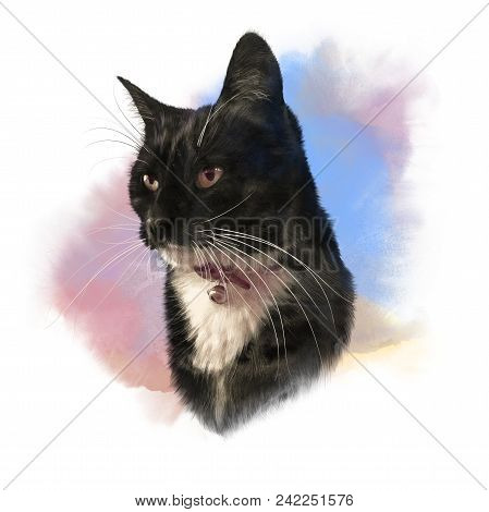 Cute Black Cat With White Breast And Mustache. Portrait Of Pet. Realistic Drawing Of A Cat On Waterc