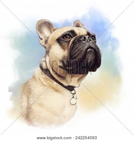 Cute French Bulldog. Realistic Drawing Of Boxer Dog On Watercolor Background. Hand Painted Illustrat