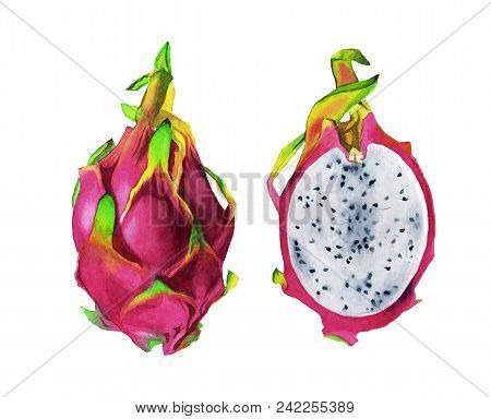Watercolor Illustration Of Pitahaya. Isolated Dragon Fruit For Label, Menu, Icon. Watercolor Hand Pa