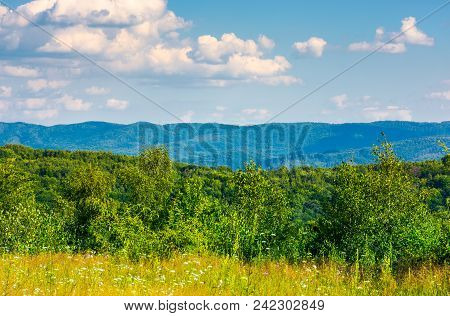 Lovely Summer Landscape In Mountains. Beautiful Scenery With Trees Behind The Field Under The Cloudy