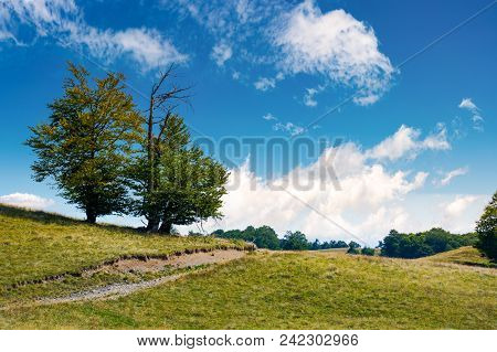 Trees On The Grassy Alpine Meadow Of Carpathians. Beautiful Mountain Landscape With Beech Forests On