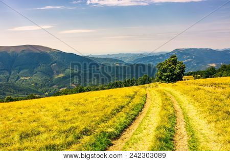 Tree By The Country Road Winding Down The Plesha Mountain. Birch Forest On The Grassy Hillside And A