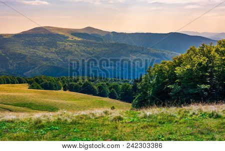 Beech Forests Of Carpathian Mountains. Gorgeous Landscape Of Svydovets Mountain Ridge. Beautiful Nat