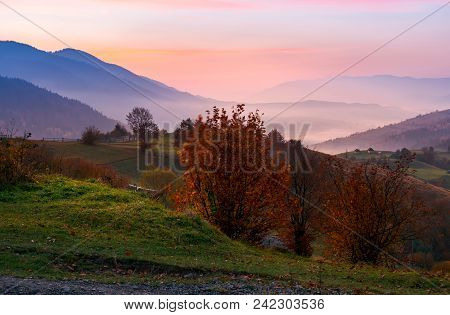 Gorgeous Purple Dawn In Mountains. Beautiful Autumn Landscape With Fog In The Distant Valley. Trees