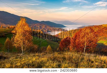 Yellow Trees On The Edge Of A Hill In Autumn. Lovely Mountain Landscape With Valley In Fog Under The