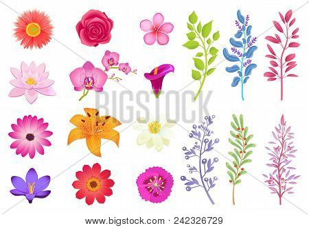 Bright Gorgeous Flowers And Wild Useful Herbs. Open Buds And Small Wild Plants. Branches Of Herbs An