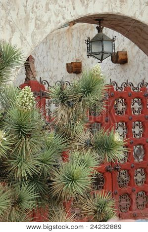 Cactus at Red Gateway