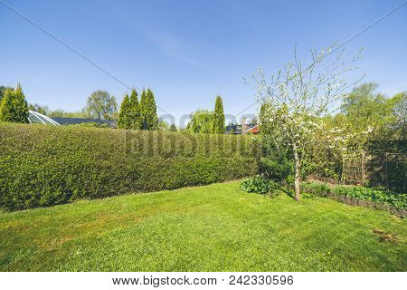 Garden With A Lawn And A Hedge Under A Blue Sky In The Spring