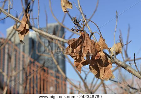 Texture Of Dry Vegetation In A Urban Area