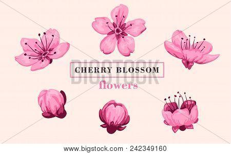 Sakura Flower Set. Sakura Vector Flower. Vector Illustration.