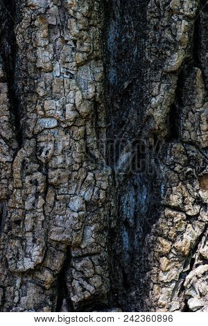 Natural Tree Trunk Background
