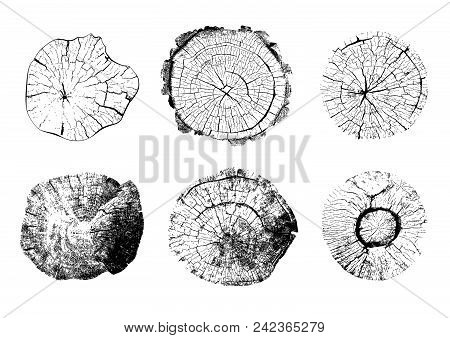 Top View Of Tree Stumps Isolated On White Background. Set Of Natural Round Wooden Textures. Black An