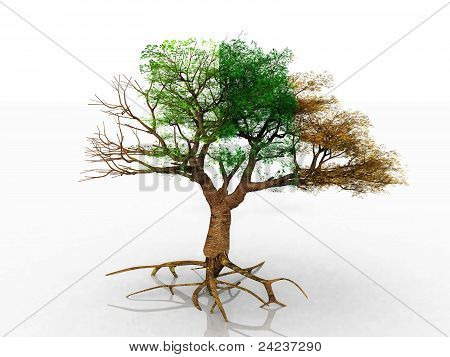 the four season tree