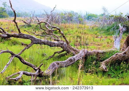 Windswept Desolate Landscape Including Plants Shaped From The Wind Surrounded By Wildflowers  On A F