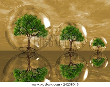 trees in a bubble