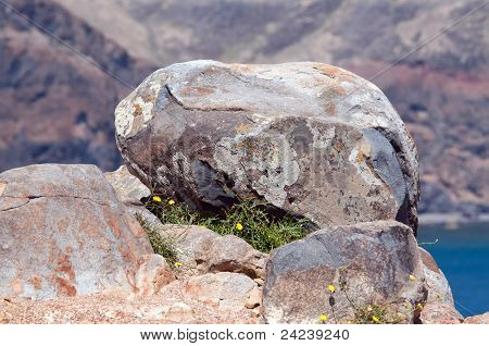 Bolder on a rock, Island of Madeira