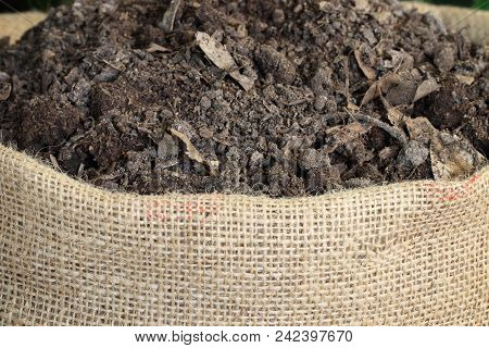 Soil With Leaves For Planting In Sack