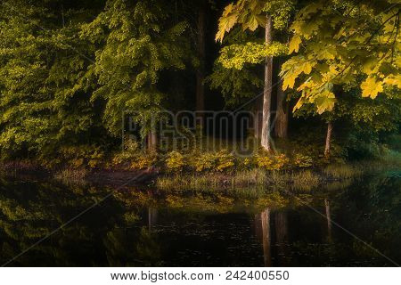 Beautiful View Of Dark Magic Forest, And Beautiful Feflection In The Water