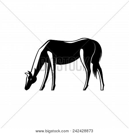Black And White Horse Standing Sideways With Its Head Down And Grazing Isolated On White Background.