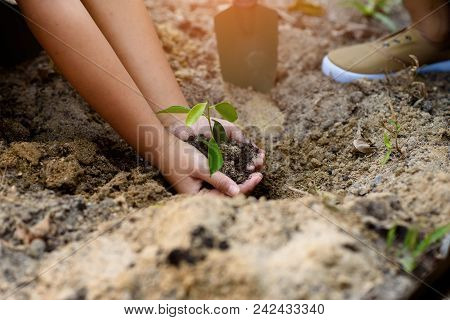 Young Children Taking Care And Planting A Seedling.
