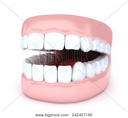 Human Jaw And Tooth On White Background. 3d Illustration