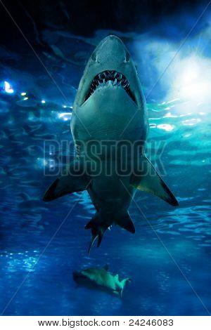 Shark silhouette underwater. Danger concept poster