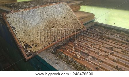 Traditional Rural Beekeeping, South Bohemia, Czech Republic
