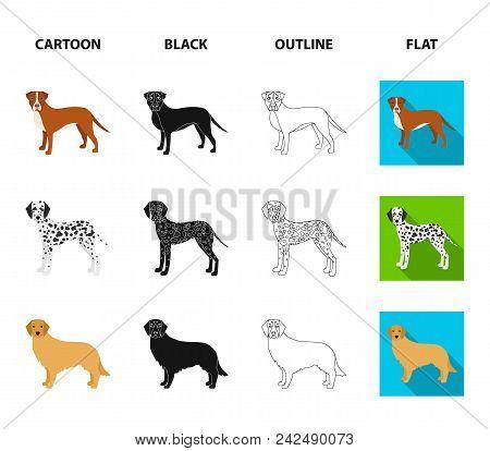 Dog Breeds Cartoon, Black, Outline, Flat Icons In Set Collection For Design.dog Pet Vector Symbol St