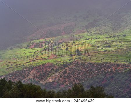 Green Fields And Trees On Gentle Slopes With Pink Mountain Rocks Of The High Atlas Mountains, Bad We
