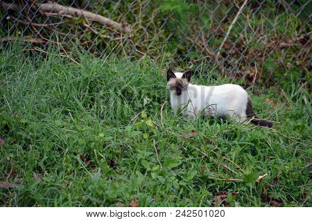 A Brown And White Cat Hunting A Garden Lizard