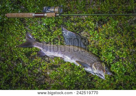 Grayling Fish And Fishing Tackle On River Shore